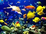 «Подводный мир» в картинной галерее им. В.В. Тихонова.